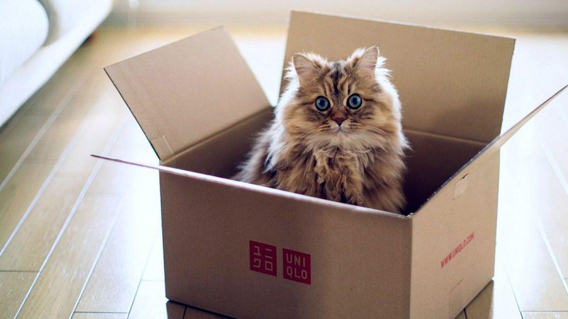 Comment déménager et habituer un chat à la nouvelle maison