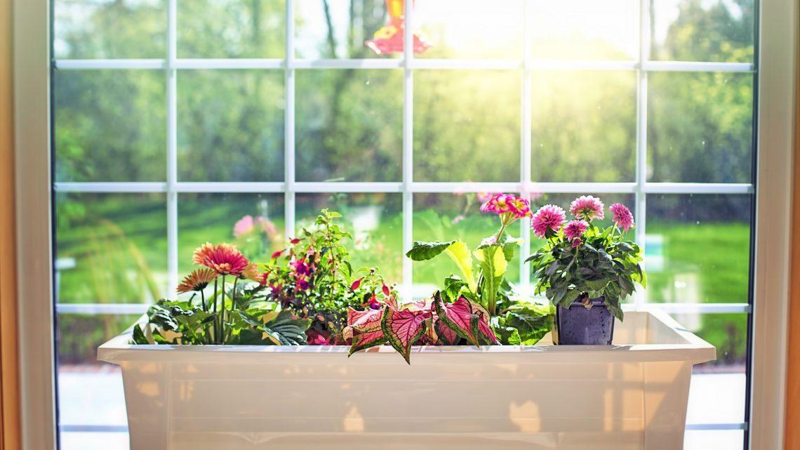Choisir un bac en fibre de verre et résine pour vos plantes